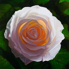 Solar Rose - Print of White Rose