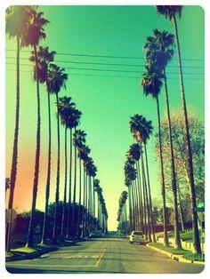 PalmTrees California!! :)