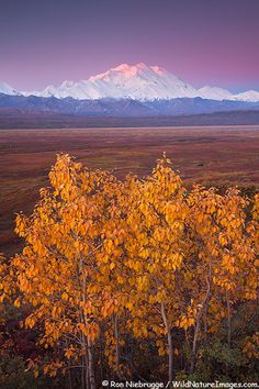 Late August and early September in Denali National Park - I think the best time for wildlife and landscape photography, and fewer visitors.