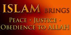 What Islam Brings Islam, Muslim Beliefs, Helping The Homeless, Bring It On, Faith, Peace, Google, Muslim, Loyalty