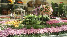 Bellagio conservatory, Las Vegas, NV