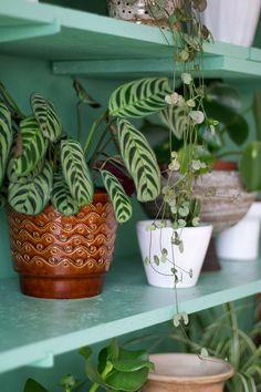 MY ATTIC voor vtwonen / plant shelfie / shelfie / urban jungle / plants / planten / groen    Fotografie: Marij Hessel Jungle Room, Shelfie, Houseplants, Indoor Plants, Planting Flowers, Planter Pots, Interior Decorating, Sweet Home, Home And Garden
