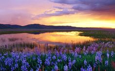 Camas Prairie at Sunset Idaho United States - sunset, united, states, window, camas, prairie, at, idaho, flowers, nature