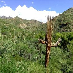 Sabino Canyon - Tucson AZ - Sabino Canyon tours offers a narrated, educational 45-minute, 3.8 mile tour into the foothills of the Santa Catalina Mountains.  (Photo via Instagram by@saraheparent - Click on the pin for more info about things to do in the Tucson area)