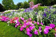 size: Photographic Print: Pretty Manicured Flower Garden with Colorful Azaleas. by Juriah : Azaleas Landscaping, Front Yard Landscaping, Backyard Landscaping, Landscaping Ideas, Backyard Ideas, Landscape Design, Garden Design, Flowers Perennials, Flower Beds