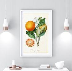 Hops Plant, Herb Wall, Fruit Print, International Paper Sizes, Botanical Illustration, Botanical Prints, Botany, Original Image, Printable Wall Art