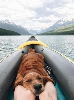 animals and pets animals and pets funny animals and pets funny hilarious so cute animals and pets puppies animals and pets dogs animals and pets memes Cute Puppies, Cute Dogs, Dogs And Puppies, Animals And Pets, Funny Animals, Cute Animals, Animal Memes, Animal Mashups, Funny Animal Photos