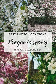 Best Spring Photo Locations in Prague, Czech Republic Europe Destinations, Europe Travel Guide, Backpacking Europe, Amazing Destinations, Travelling Europe, Travel Guides, Ukraine, Prague Travel, Spring Photos