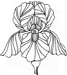 Drawings of Flowers for Beginners: When Drawing Flowers Becomes a ... - ClipArt Best - ClipArt Best