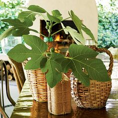 Easy Outdoor Centerpiece | Fig leaves clipped from the yard fill Heather's collection of wicker-wrapped wine jugs. She scattered them down the table for a simple centerpiece that naturally complements the space. | SouthernLiving.com