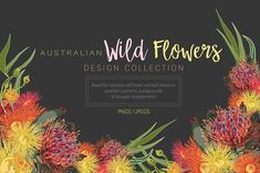 Ad: Australian Wild Flowers Collection by Sketchbook Designs on Australian Wild Flowers Design Collection Get your creative on! This Floral clipart set will inspire you to create custom designs, using our Business Illustration, Pencil Illustration, Graphic Illustration, Illustrations, Australian Flowers, Australian Plants, Watercolor And Ink, Watercolor Flowers, Watercolor Design