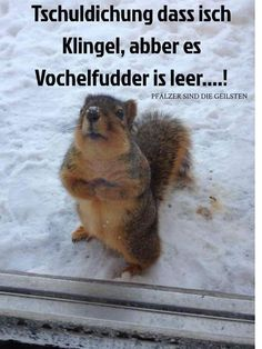All information about Funny Animal Quotes For Kids. Pictures of Funny Animal Quotes For Kids and many more. Humor Animal, Funny Animal Memes, Animal Quotes, Funny Animal Pictures, Cute Pictures, Funny Memes, Funniest Memes, Squirrel Pictures, Funniest Pictures
