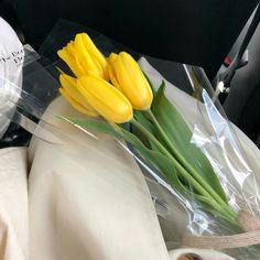 No Rain No Flowers, Blooming Flowers, My Flower, Flower Power, Fresh Flowers, Beautiful Flowers, Plants Are Friends, Mellow Yellow, Tulips
