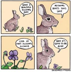 I JUST IMAGINE THIS REALLY MANLY VOICE FOR THE BUNNY AND I CAN'T STOP LAUGHING!!!!!!!