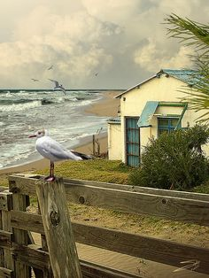 beach.quenalbertini: Cottage By The Sea | Digital Art by IM Spadecaller