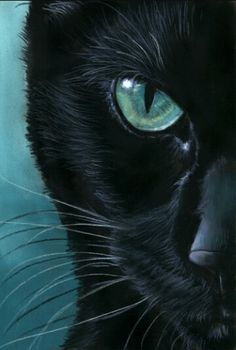 black Cat Portrait - Turquoise Eyes by art-it-art. on - Artistic cats - Katzen / Cat Art It, Black Cat Art, Black Cats, Black Cat Painting, Black Cat Drawing, Black Cat Images, Black Cat Eyes, Turquoise Eyes, Turquoise Art
