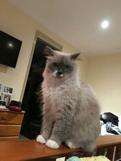 Baby is still missing!  Baby has been missing since the 5th March from Worongary, Queensland. She is not chipped and she does not have a collar. She does not come when called as she doesn't really like people.