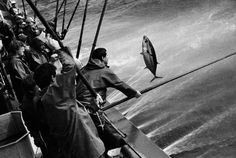 Jean Gaumy.  SPAIN. The tuna fish are caught with fishing rods made of fibre or bamboo rods over 5 to 6 meters long, and rapidly unhooked by an assistant.The water sprayed on the surface of the sea is to imitate the movement of small fish, which the tuna surface to catch. Bait is thrown into the spray to attract the tuna, which are then caught by hook abd line. 1996.