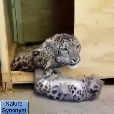 enjoy this Noah's Ark experience even more with the speakers on. Puppies And Kitties, Funny Cats And Dogs, Cute Puppies, Cats And Kittens, Cute Funny Animals, Cute Baby Animals, Animals And Pets, Cute Cats, Cute Animal Videos