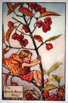 Spindle Berry Flower Fairy Vintage Print,  Cicely Mary Barker--printed c.1927 – The Spindle Berry Flower Fairy is one of Cicely Barkers Autumn Flower Fairies.