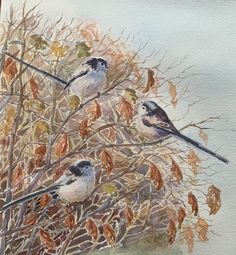 Conference in the hedge by Emma P - Modern Eagle Eye, Goldfinch, Bird Drawings, Eye Art, Go Outside, Hedges, Painting & Drawing, Wildlife, Birds