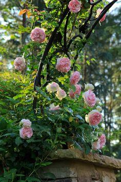 The Graceful Gardener | My garden is my favorite teacher.