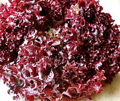 #LollaRosa #Heirloom Leaf #Lettuce Seeds Non GMO Naturally Grown Open Pollinated