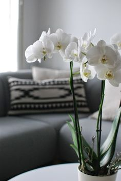 DecoDreamer's Diary: White orchid White Orchids, Vase, Living Room, Plants, Home Decor, Decoration Home, Room Decor, Home Living Room, Drawing Room