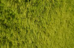Shaggy Rug - Green 5' x 7'