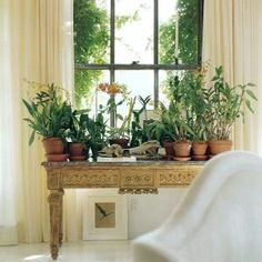 century) side board with flowers in terracotta pots. Interior by Vicente Wolf Big Indoor Plants, Indoor Garden, Potted Plants, Plant Table, A Table, Antique Interior, Interior Plants, Winter Garden, Beautiful Space