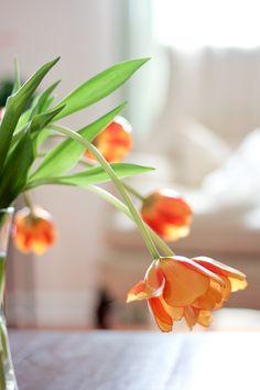 Spring Into Orange