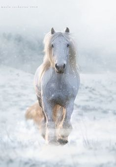 White beauty, horse, hest, animal, Winter, snow, beauty of Nature, beautiful, gorgeous, photo
