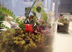 El placer del mini-jardinero / The joy of the mini-gardener - OPENstudio 79