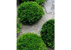 favorite.dwarf bowwood.gravel.stone.Shrader Design | Exterior Design