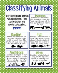Classifying Animals Anchor Chart: