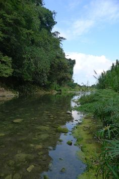 The Buff Bay River running through Charles Town, located in the Buff Bay Valley, Portland #ecotourism #Jamaica