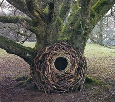 installations by andy goldsworthy