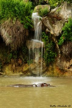 Hippo and waterfall by Michela Botta on 500px