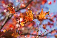 Autumn Colours - Cascade #Gardens, #Hobart Photo by Anelda Lotter Photography; article for think-tasmania.com