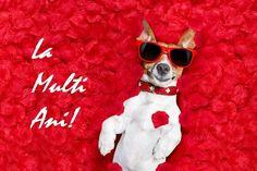 Mesaje amuzante de la multi ani Dog Days, Puppy Love, Cat Eye Sunglasses, Dog Lovers, Girly, Puppies, Pets, Animals, Adorable Dogs