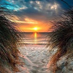 Just in case you needed one more reason to come stay on Anna Maria Island 🌅 . Fantasy Football, Beach Pictures, Pretty Pictures, Outdoor Pictures, I Love The Beach, Beach Quotes, Am Meer, Island Resort, Beach Scenes