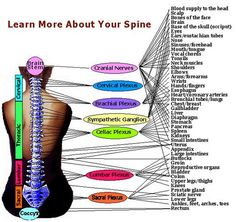 Learn More About Your Spine...