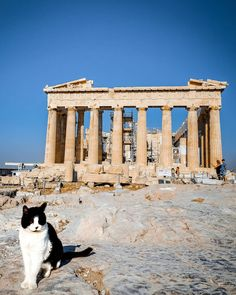 Purr-don sir, I would like a picture, meow 🐈 If you are a cat lover, Athens might be your dream place. In contrast with lots of places… Beautiful Streets, Acropolis, Sandy Beaches, Travel Couple, Stunning View, Greek Islands, Historical Sites, Wonderful Places, Beautiful Landscapes