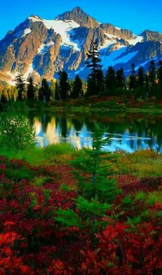 Nature Forest Lake Outdoors Ideas For 2019 Beautiful Nature Pictures, Nature Photos, Amazing Nature, Beautiful Landscapes, Beautiful World, Beautiful Places, Nature Videos, Nature Nature, Nature Animals