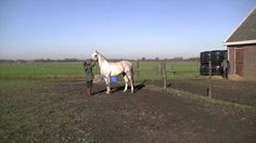 """Kaisson & Christina // Playing // CNC  Our 8 years old """"Straight Russian"""" Arabian stallion Kaisson and Christina having fun in the field.  Kais x Nazrala by Balaton Arabians  I am so proud of my daughter!"""