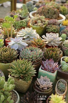 Beautiful easy to care for succulents!