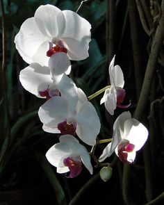 Belle Isle Orchids