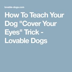 """How To Teach Your Dog """"Cover Your Eyes"""" Trick - Lovable Dogs"""