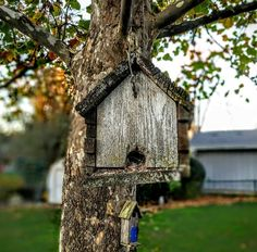 Schaumburg IL #natureart #myphotography #androidography #birdie #house #fall #beautiful #amazing #photoofday #beautiful #livelaughlove #tag #share #repost #followme #like #andytrejo