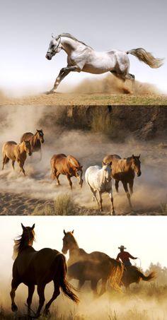 Animals, horses, horses, dust, sand, horses, dust, animals
